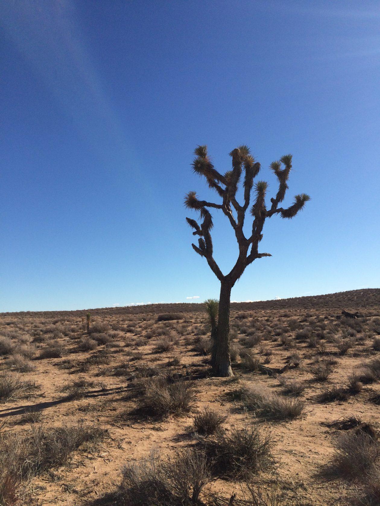 Nevada Desert & Joshua Trees